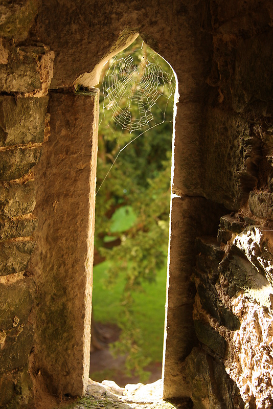Spider web at Blarney Castle by RFK C
