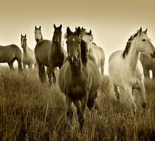 The Horses by Steven  Lippis