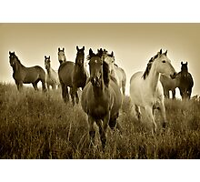 The Horses Photographic Print