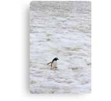 "Gentoo Penguin ~ ""It's a long walk home"" Canvas Print"