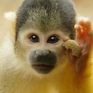 Squirrel Monkey by Lisa Roberts