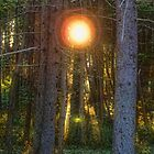Sunflare in the Forest by Lyana Votey