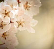 The Fragrance of Spring by Appel