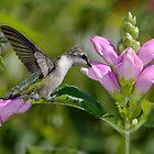 Hummingbird In The Turltleheads by Gary Fairhead