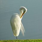 Graceful Great White Egret by Christina Spiegeland