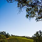 Gumeracha Vineyard by Luke Gibbs