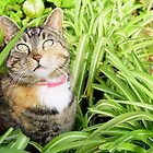 Daydreaming Garden Cat by Christina Spiegeland