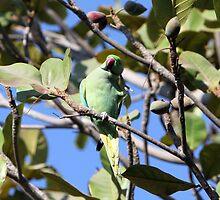 A parrot. by debjyotinayak