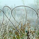 Frosted Razor Wire by IngridSonja