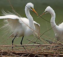 Avery Island Egrets--Teamwork by Bonnie T.  Barry