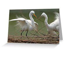 Avery Island Egrets--Teamwork Greeting Card