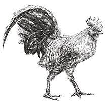 Rooster by Anastasia Zabrodina