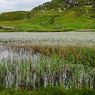Reeds and Water Lilies - Isle of Lewis, Western Isles, Scotland by BlueMoonRose