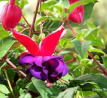Fuschia by Glenna Walker