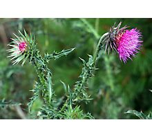 """The Common but Beautiful """"Musk Thistle""""  Photographic Print"""