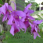 Purple Orchid by minniemanx