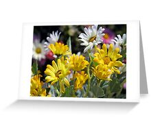 *SPRING DAISIES* Greeting Card