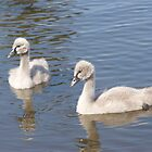 The Ugly Ducklings - Centennial Park by jhea5333