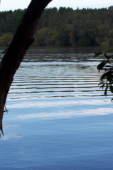 Manning River - Taree  by jhea5333
