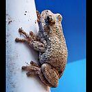 Frog by Elizabeth Burton