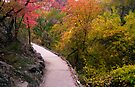 Fall Color on the Trail from Weeping Rock by Zane Paxton