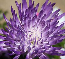 *Purple Mum* by Van Coleman