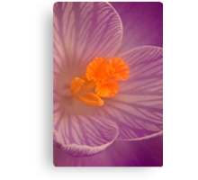 Deep Down ( Crocus) Canvas Print