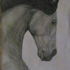 Lusitano Stallion by Tiffany Rach