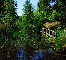 By Dunwich Pond by Karen  Betts