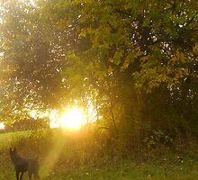Raising the Sun with Song: Modest Truth by Quinn Blackburn