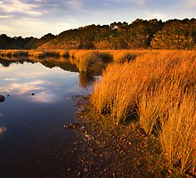 Reeds at Sunset - Strahan Tasmania by Hans Kawitzki