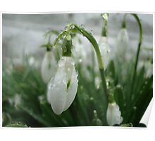 Raindrops on Snowdrops Poster