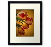 Tulip Lights Framed Print