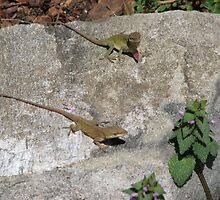 Dewlap Out-Anole Lizard by JeffeeArt4u