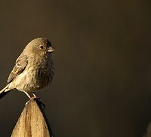Bird on a Fence by agrimace