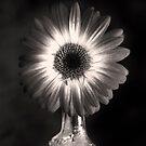 Daisy by Jay Reed