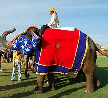 Decorated elephants saluting with mahout by marijit