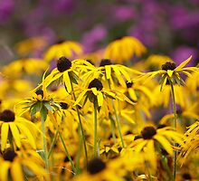 Yellow Glory by Andy Freer