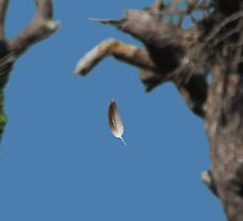 FLOATING BALD EAGLE FEATHER by TomBaumker