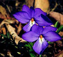 violets by Phillip M. Burrow