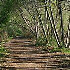 morning trail by Karol Franks