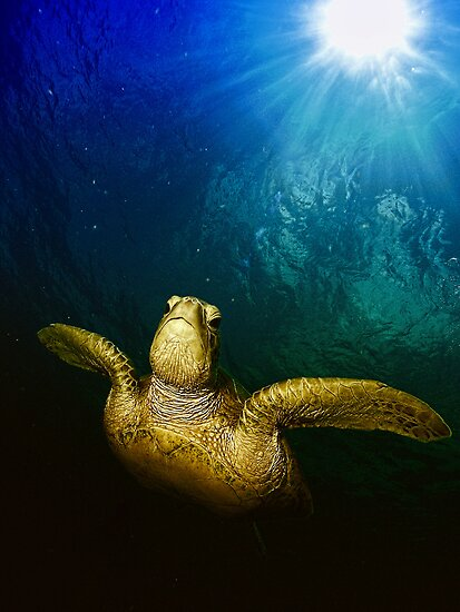 The old green turtle by Gerard Rotse