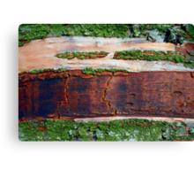 Destruction of the Rain Forest (Ariel View) Canvas Print