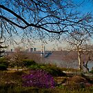 The Heather Gardens in Fort Tryon Park, Manhattan New York City by Dave Bledsoe