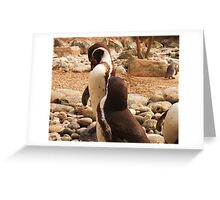Penguins Preening at Colchester Zoo Greeting Card