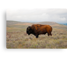 Iconic Image - American Bison Canvas Print