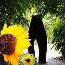 Sunflower shining by robert murray