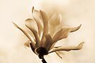 FLOWING PETALS by Sandy Stewart