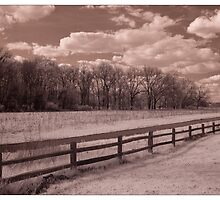 Fence Line by Rene Hales