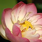 Lotus and Friend by Anne Smyth